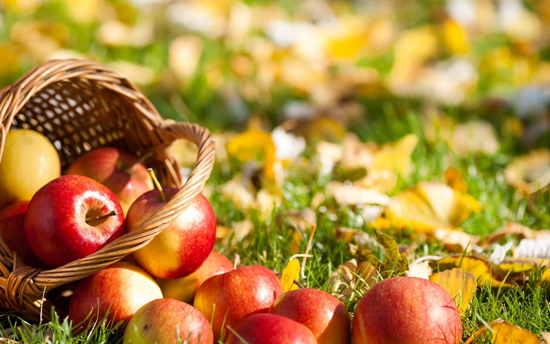 Top 7 Best SuperFoods For Fall